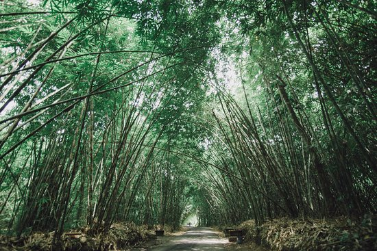 bamboo forest, bali esa drivers